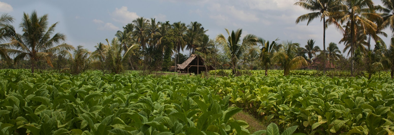 sustainability_good_agricultural_practices
